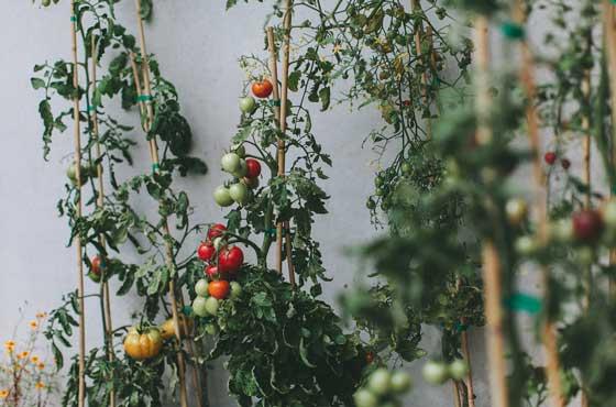 Organic-Cuisine--2